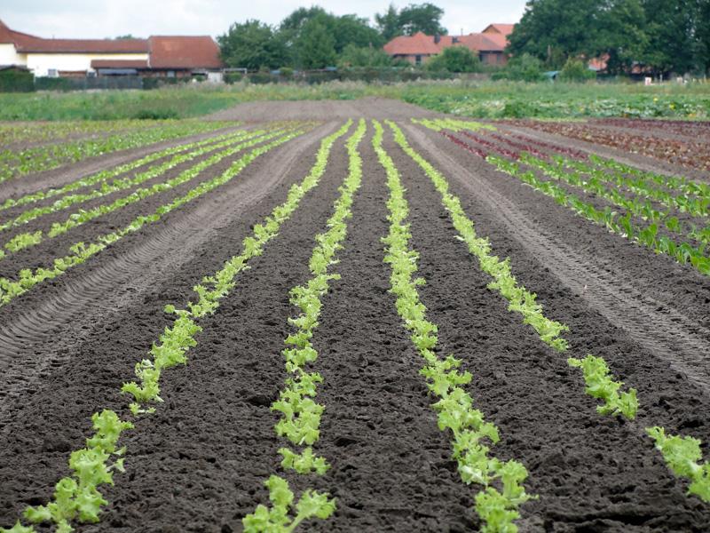 Die Felder der Gärtnerei